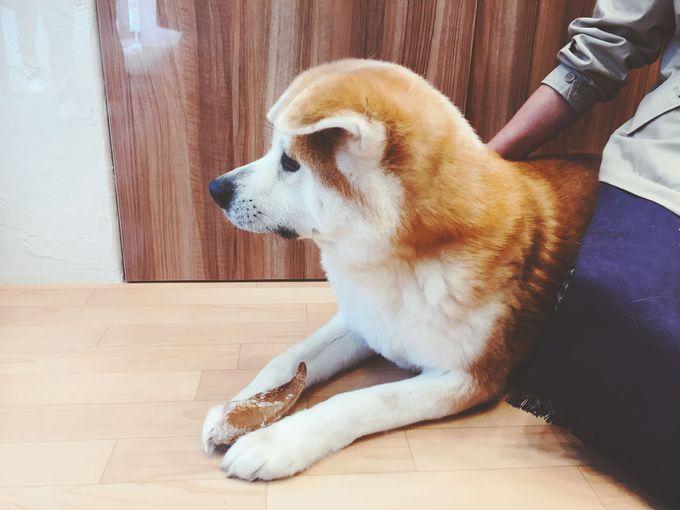 「秋田犬ステーション」で秋田犬の観察&写真撮影を楽しもう!