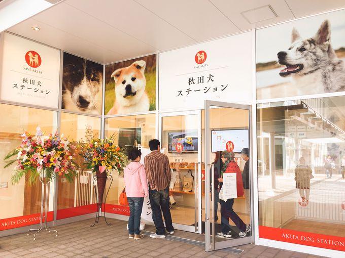 秋田市中心部に「秋田犬ステーション」が待望のオープン!