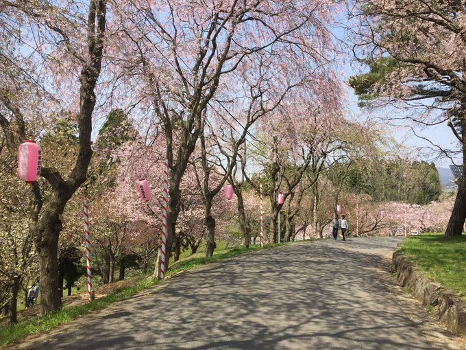 3.日本国花苑/井川町