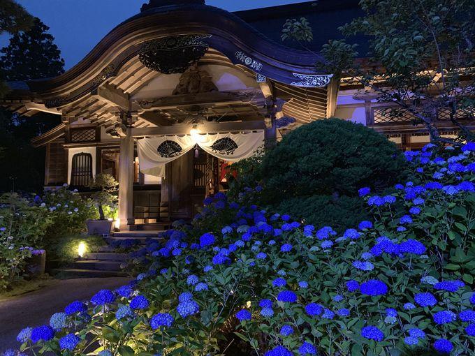 あじさいの名所!「雲昌寺」の夜間特別拝観