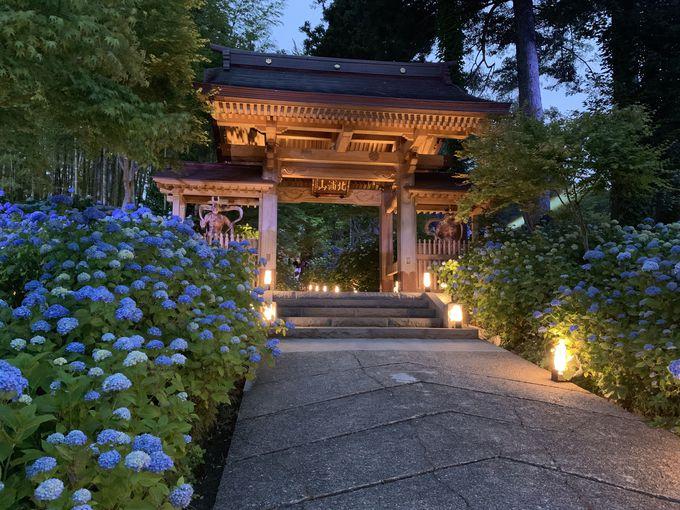 夜の「雲昌寺」で静かに青の世界にひたろう!