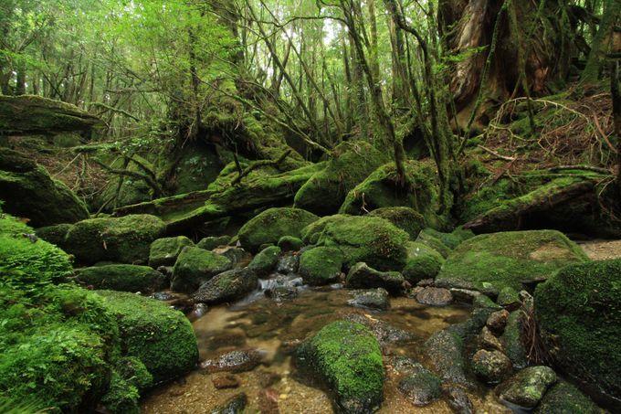 白谷雲水峡の見所は、水・苔・古木