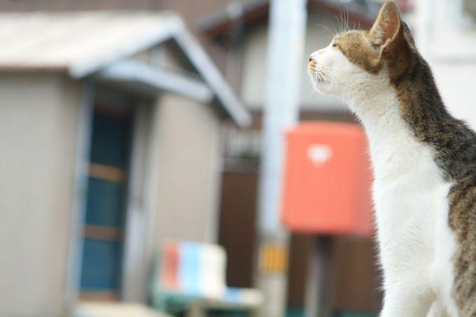 場所によってはカラフルな猫写真に