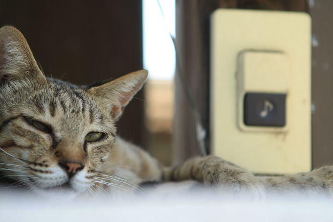 生活感丸出しの猫ネコねこ…