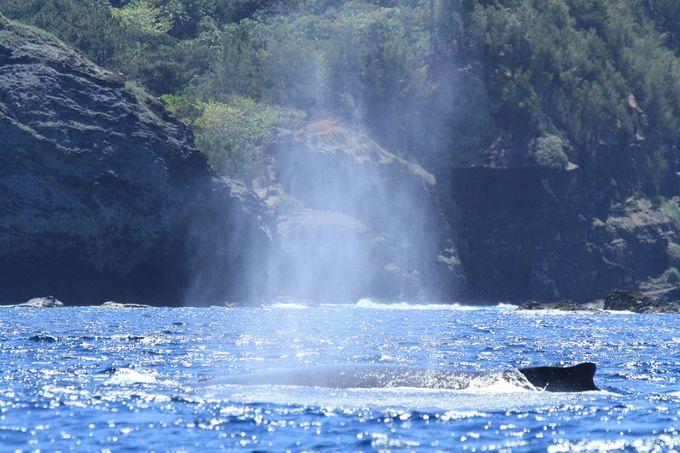 まずはクジラを見つけよう