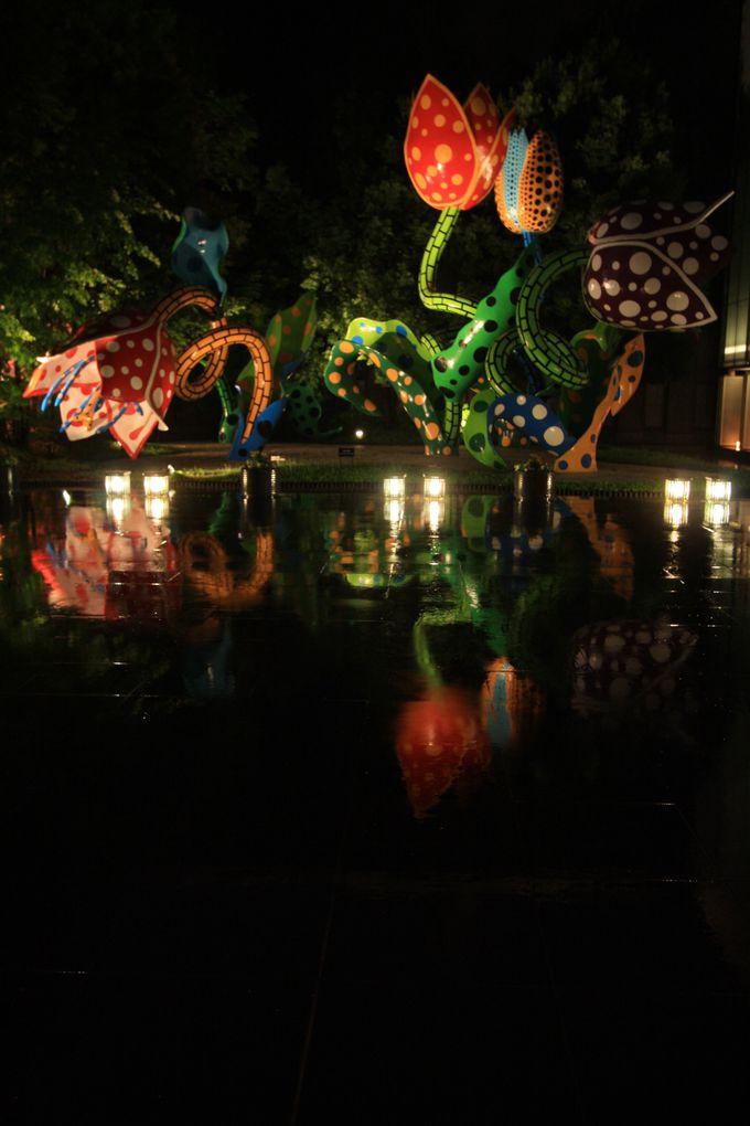 雨の夜は逆さ『幻の華』を見るチャンス!
