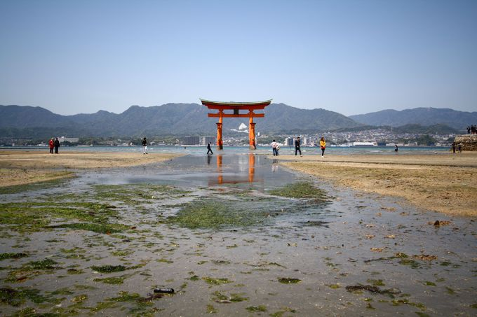 まずは厳島神社、潮によって変化する鳥居の脚元に注目