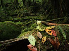 宮崎駿監督も通ったもののけの森へ!屋久島「白谷雲水峡」