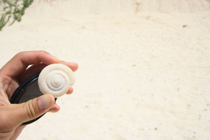 ヒロベソカタマイマイの半化石が転がる海岸