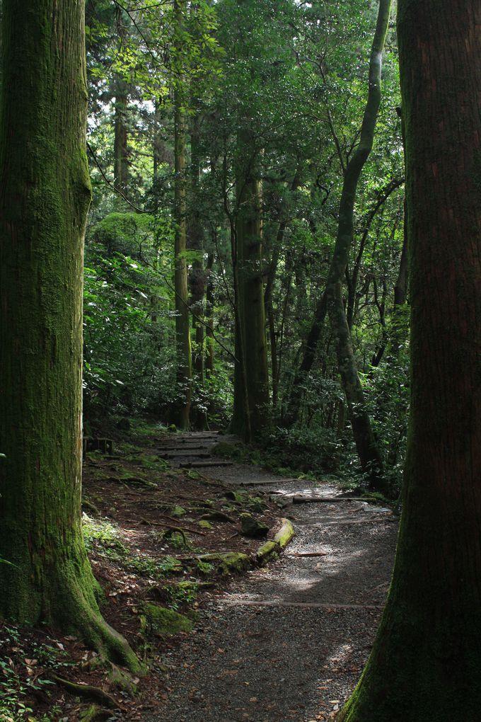 日本森林浴の森百選の遊歩道もいい被写体です