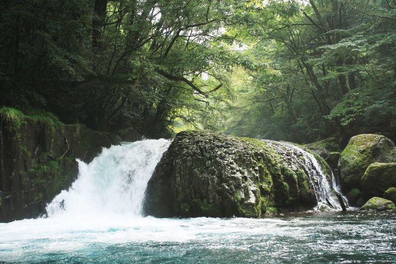 滝も巨木も渓流も!熊本「菊池渓谷」の魅力を写真に収めよう