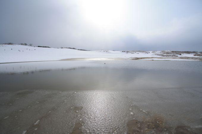 オアシスも凍る真冬の鳥取砂丘