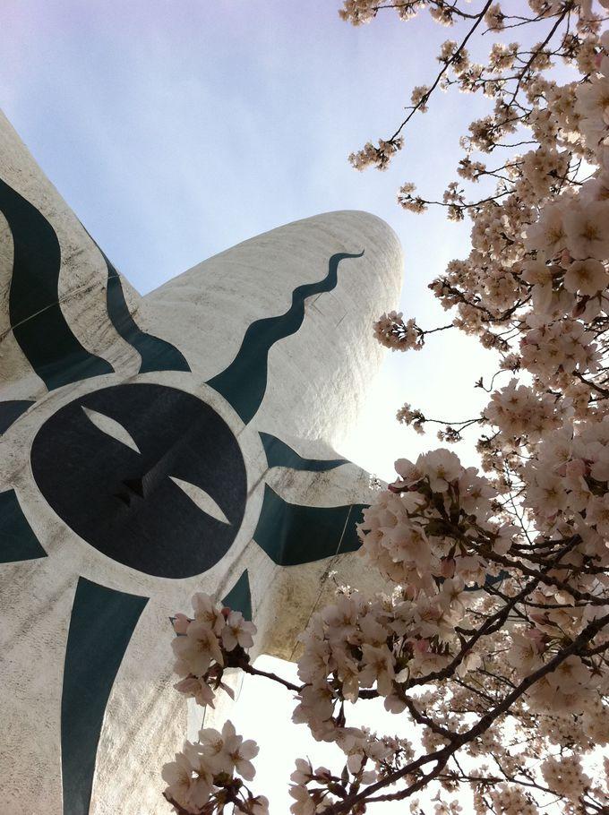 桜と太陽の塔を一緒に楽しもう