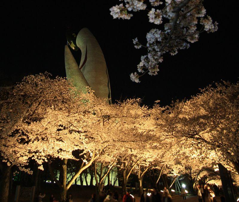 夜は桜のライトアップも!大阪のお花見は万博記念公園で決まり
