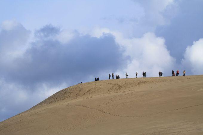 馬の背を見上げると、まるで砂丘が空に浮かんでいるよう
