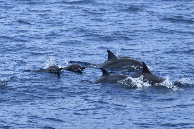 イルカと泳ぐ神秘的な時間