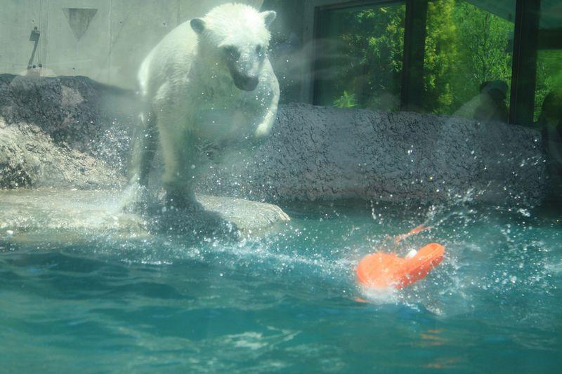 泳ぐ・跳ぶ・走る!「とくしま動物園」で動物たちのかわいい動きを楽しもう