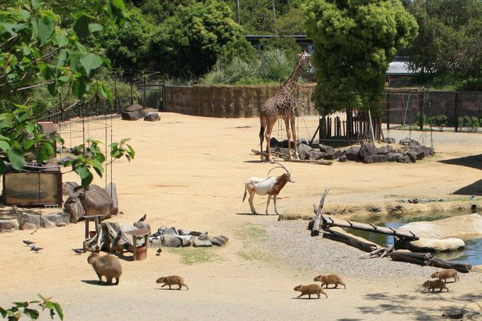 たくさんの動物が一緒に住むサバンナエリア