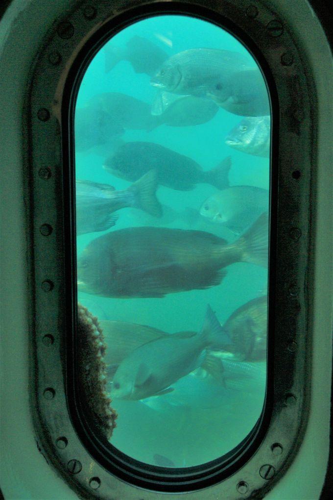 窓の外には魚の群れが