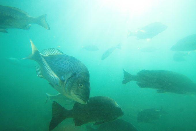 魚の種類も豊富
