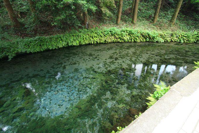 もう一つ注目したい熊本の水スポット、白川水源