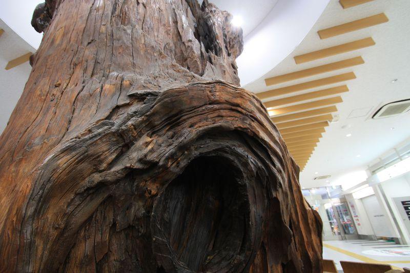 世界唯一!樹齢三千年の屋久杉前で待ち合わせ「鹿児島中央駅」
