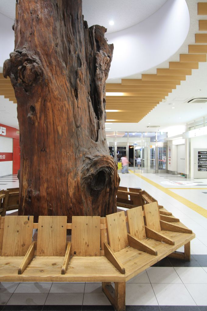 西口にある気になる木、その名も「出逢い杉」!