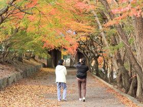 「丈六寺」は徳島の穴場紅葉名所!紅葉のグラデーションで秋を楽しもう