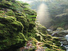 あなたは苔派?それとも滝派?徳島「轟の滝」は神秘を感じる秘境の地