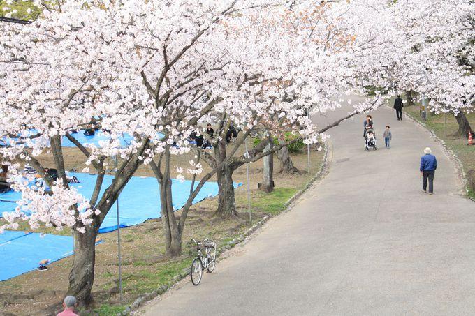 桜の名所、徳島中央公園