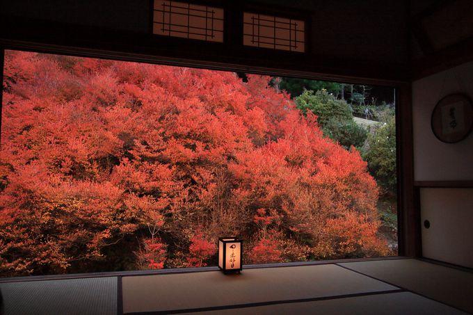 安国寺の紅葉ライトアップ、その種類は?