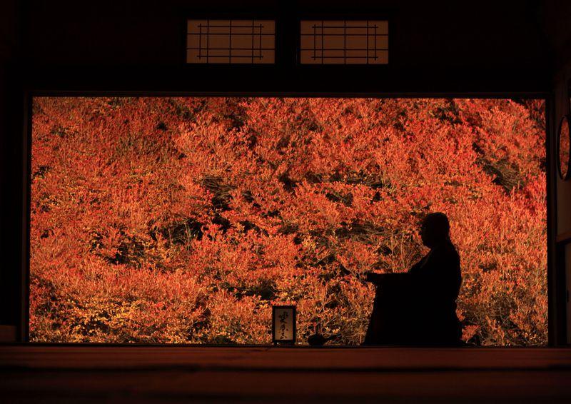 兵庫「安国寺」の紅葉ライトアップはまさに秋の絶景なり!