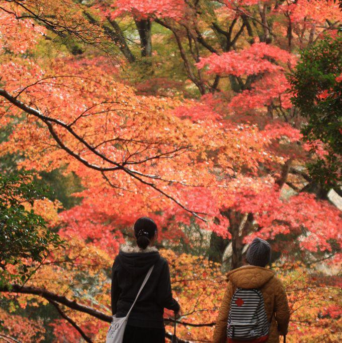 秋には紅葉まつりが開催されます