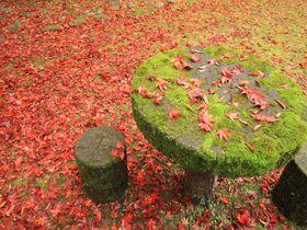 鰐淵寺の紅葉は見事の一言!島根の自然に抱かれた秋の古刹を見よ