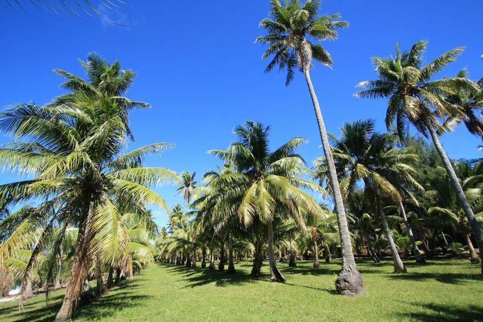 他にも島には魅力的な見どころが充実