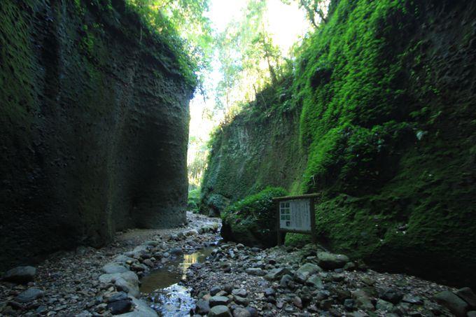 「伊尾木洞」は素晴らしきシダの世界