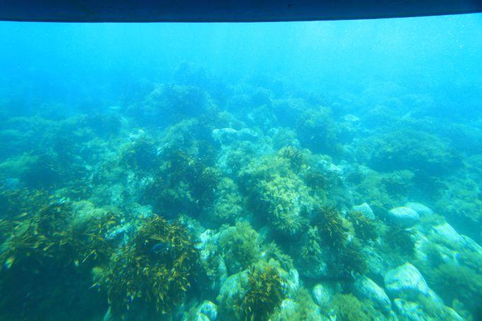 透明度が高い海を「海中展望船あまんぼう」で堪能