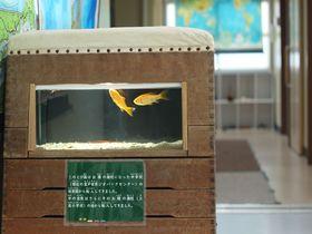 むろと廃校水族館の生き物が自由すぎる!プールで泳ぐサメを目撃せよ