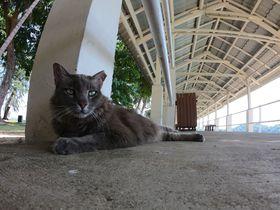 シンガポールの猫島へ!セントジョンズ島なら数時間で満喫可能