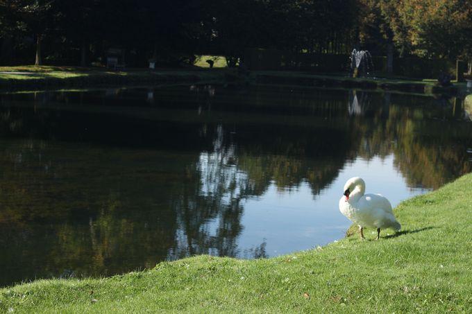 「アンヌヴォワ庭園」でワロンの自然に触れる