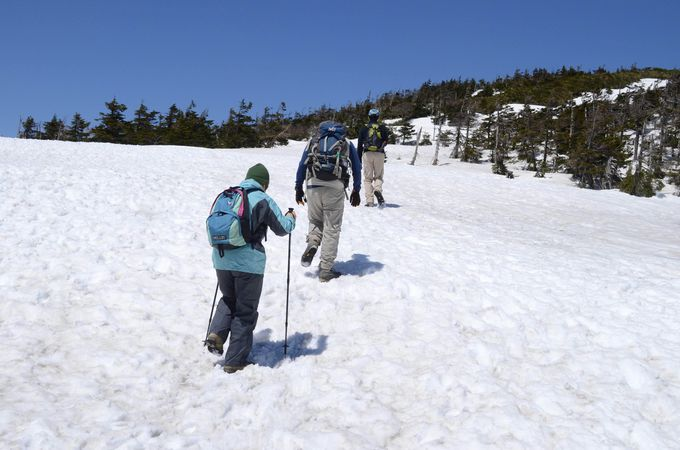 山頂までのトレッキングもできます
