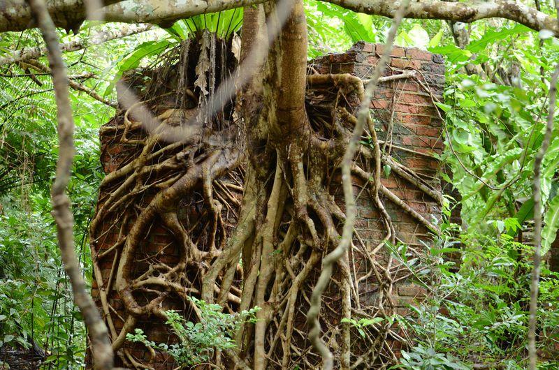 西表島に廃墟!?「ウタラ炭鉱跡」で島の隠れた歴史に触れる