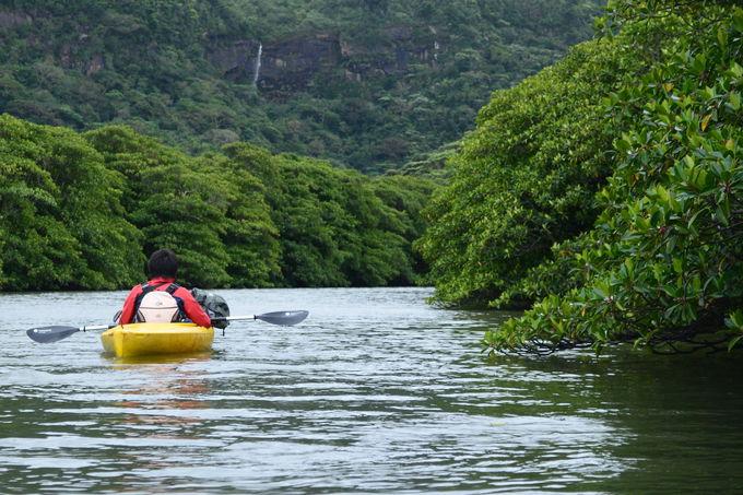 西表島の一般的なイメージは自然だけど…