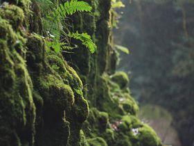 徳島は苔の隠れ名所で溢れてる!?見応え抜群の苔3スポット