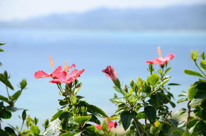 玉取崎展望台は花も一緒に楽しもう