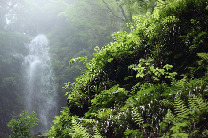 神々しささえ感じる雨乞いの滝へ