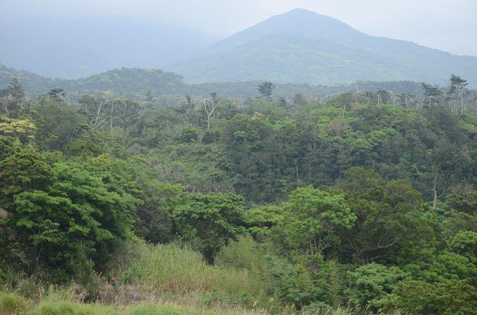 内陸部の自然は、まるで東南アジア?