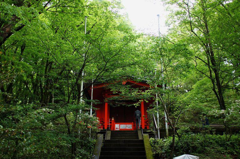 月次祭だけじゃない!「九頭龍神社本宮」は箱根の森に佇む縁結びの神様