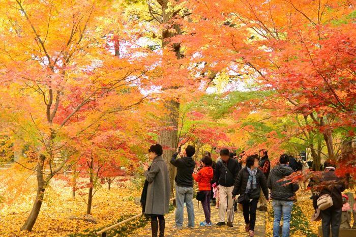 都内で京都のような紅葉が!ブルーヘッド仏の寺「九品仏浄真寺」