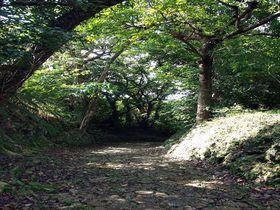 那覇・首里城界隈 古道巡りで琉球の文化と暮らしに触れる
